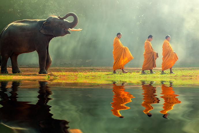 Elephant and monks