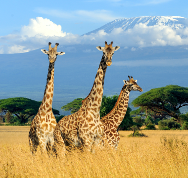 Go on an epic live stream safari—These sites have timed streams during the day