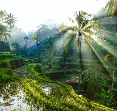 Tour the mystical landscape of Bali